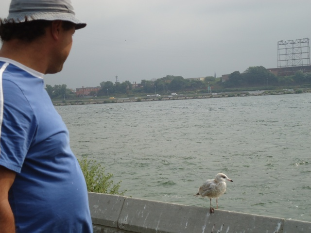 Harry says hello to seagull friend on niagara pkwy wall beside him 22 aug 2013 1058 am edt linda randall
