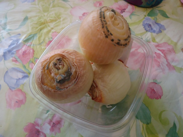 Onions 30 days with virus flu germs from inside house 29 aug 2013 linda randall the idea girl says youtube channel