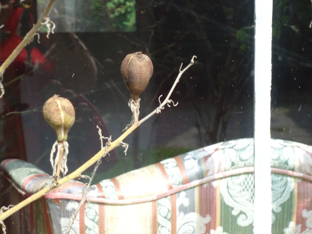 swayze cottage alien flower pods NOTL ontario canada living room window 1 oct 2013 linda randall reflection