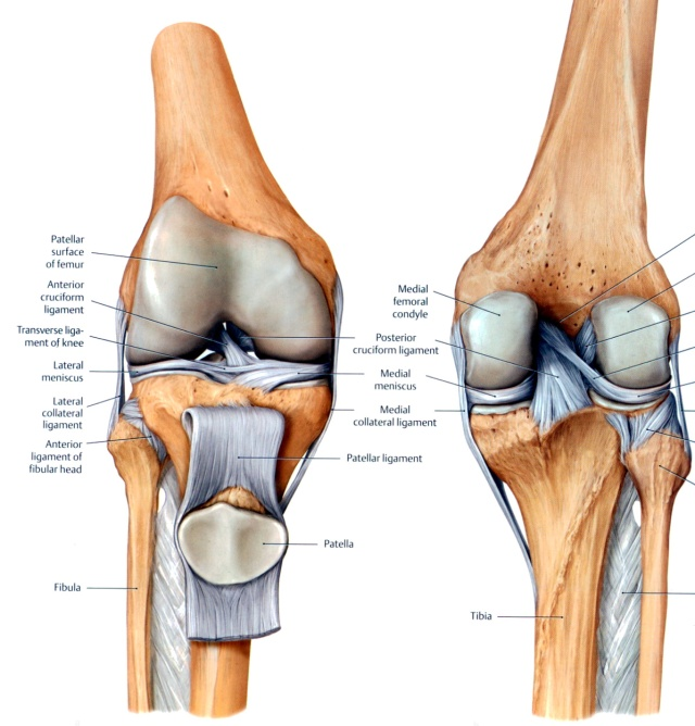 knee-patella walking core exercises yoga problems solutions the idea girl says harry needs this linda randall chisholm