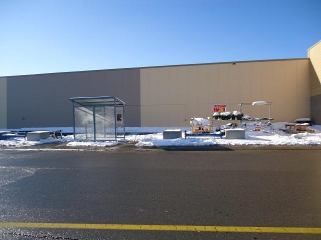 bus stop plants in snow at walmart fort erie 16 dec 2013 linda randall