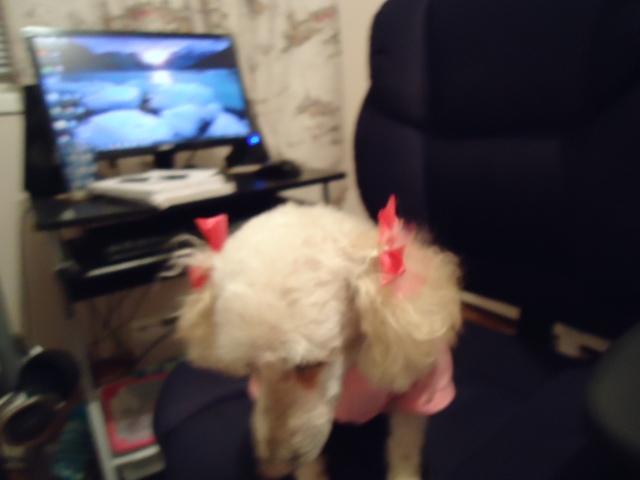 pink bows hair doo 1 feb 2014 linda randall love the ears