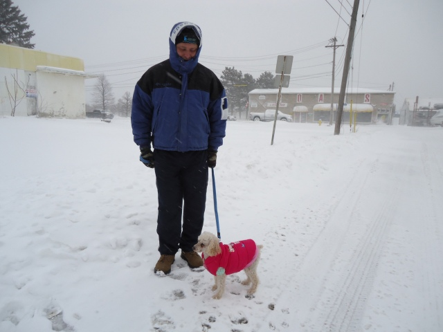 harold daisy walk in snow snow fall linda randall idea girl canada fort erie 12 mar 2014 blizzard