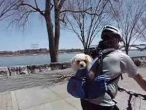 outward-hound-backpack-pet-carrier-harold-with-daisy-toy-poodle-cycling-2013-fort-erie-niagara-river-parkway-trail