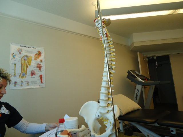 spine bones charts physio room linda randall 28 feb 2014