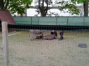 Donkey gives Birth to boy may 16 2015 810 pm linda randall - idea girl canada wordpress